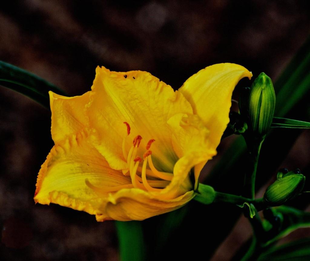 flyflower